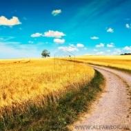 (код Т861)Земля для сельского хозяйства 500 Га. ОСГ со всеми документами.Поселок Майдановка. Бородянский район.