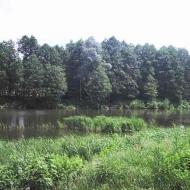 (Код объекта Н3402) Аренда дома.с.Тарасовка.Киево-Святошинский р-н.