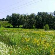 (Код объекта Т1832) Продажа земельного участка площадью 45 соток в с. Лесники Киево-Святошинского р-на