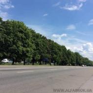 Продам участок 127 соток, 0Киев, Святошинский (Код T4331)